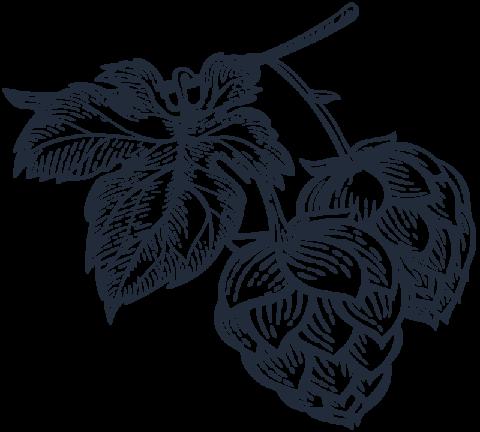 illustration houblon 3 monts